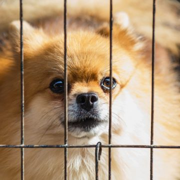 California law only allows sale of rescue, shelter animals