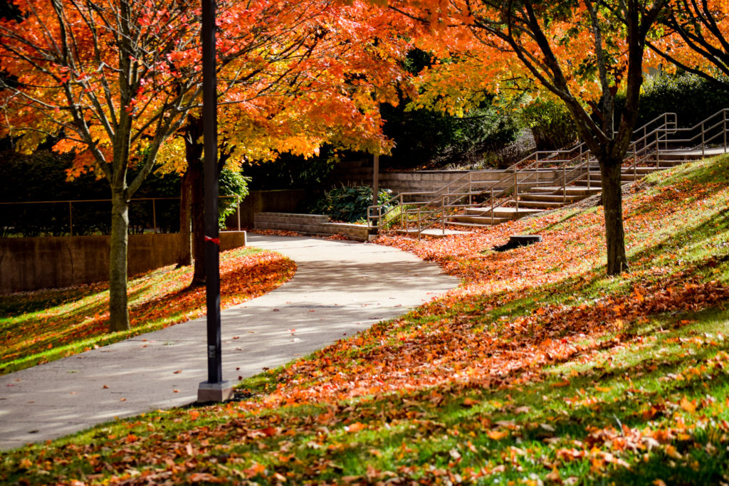 Fall on Campus | Photo by Jessica Fugett | The Wright State Guardian