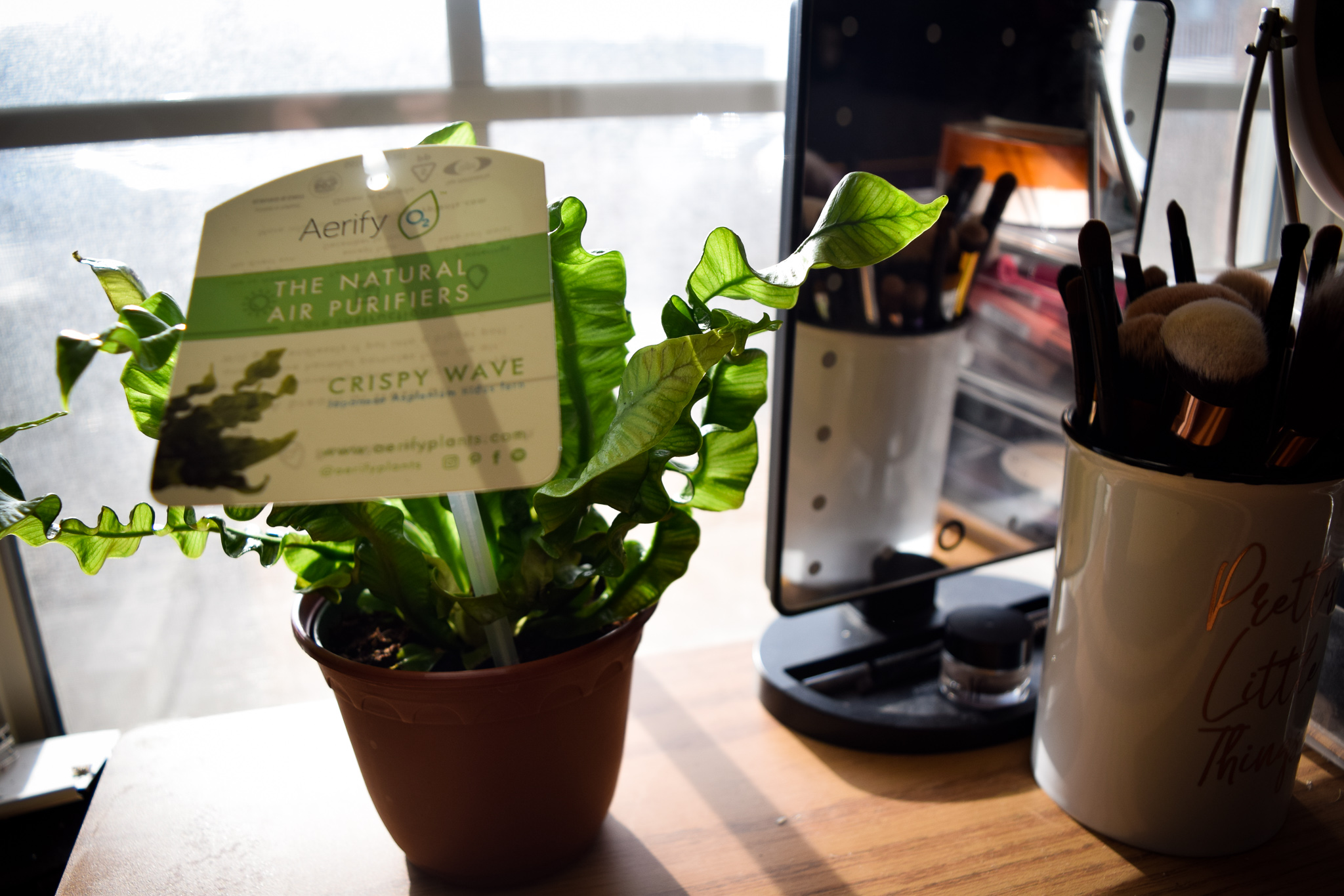 Best Plants for Dorm Rooms | Photo by Jessica Fugett | The Wright State Guardian
